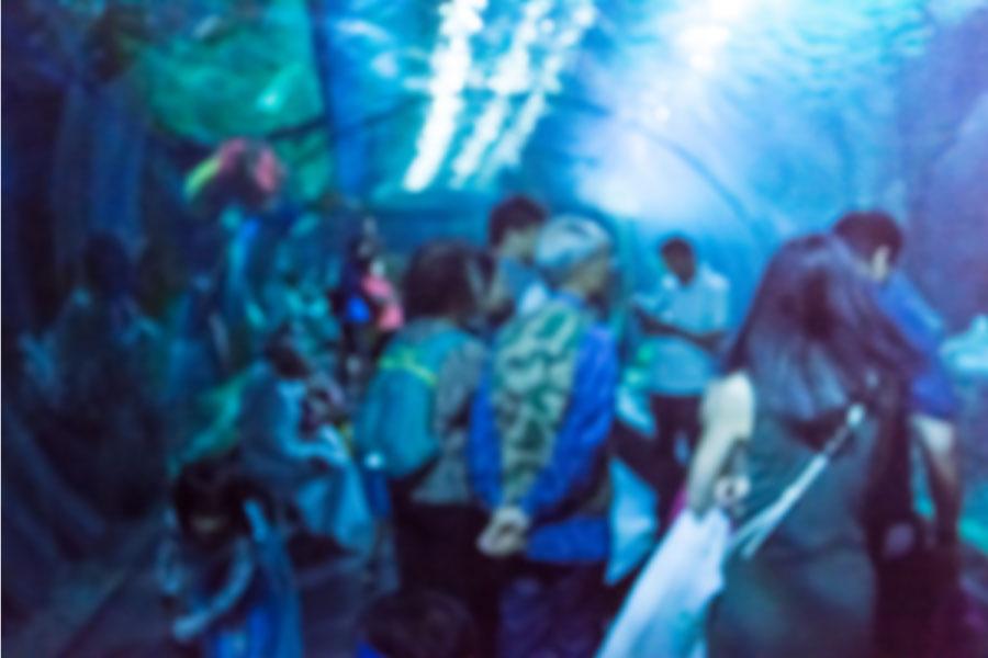 初デート場所におすすめの水族館